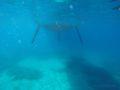 split-sailing-net-Mljet-anchor-1