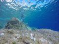 split-sailing-net-Aquarius-sailing-Bisevo-W-cave-15