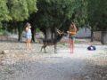 split sailing net – deer encounter