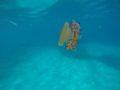 split-sailing-net-Lastovo-jelly-2.jpg